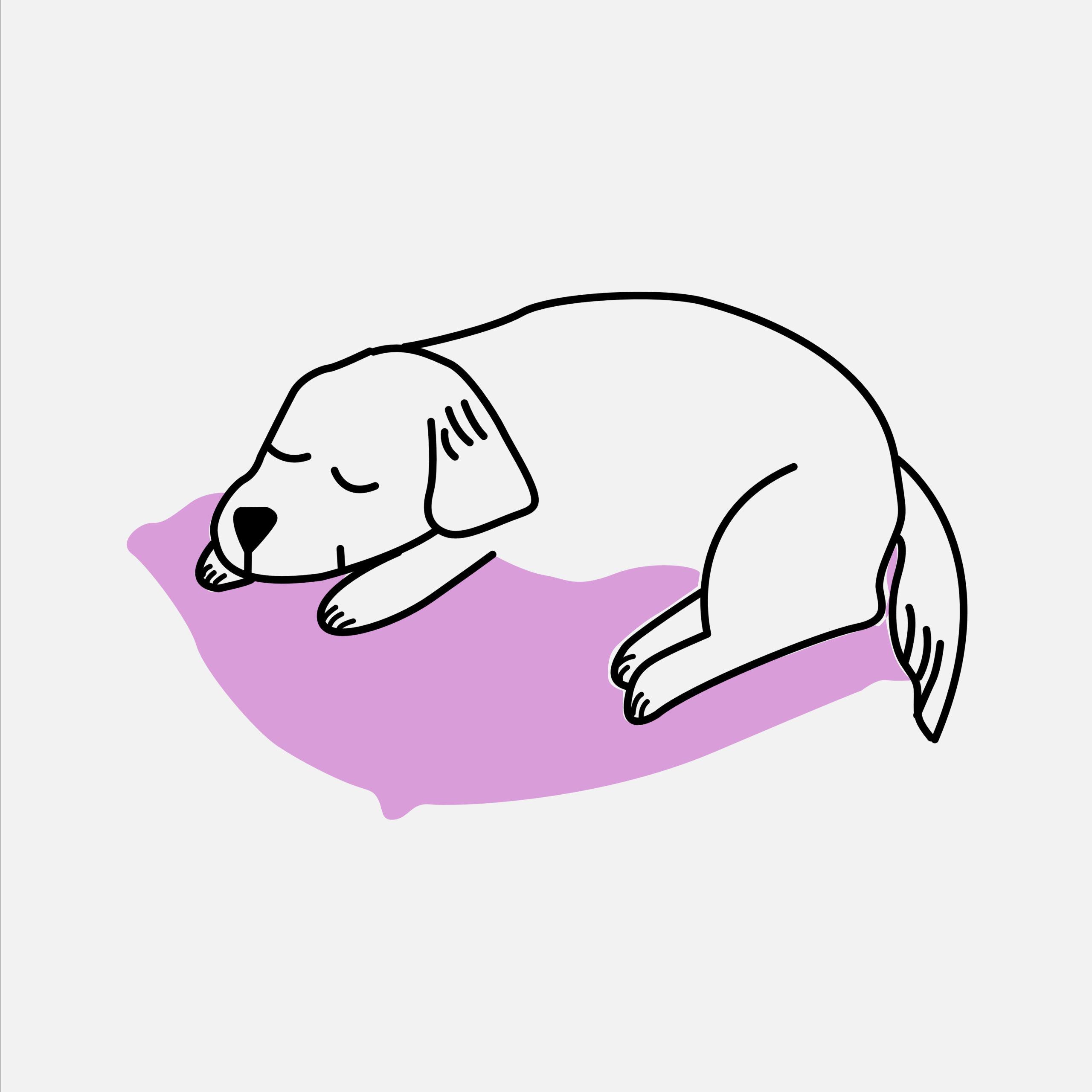 Honden- en kattenkussens